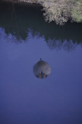 balloon water-reflection with river-bank