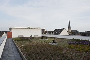 Rüdesheimer Square: extensive roof greening
